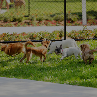 Large Dog Park at Country Park Villas Apartments